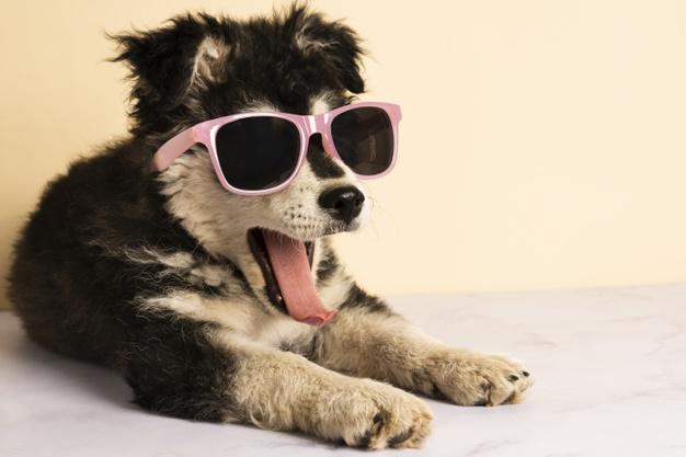 cute-puppy-with-sunglasses-yawning_23-2148290335
