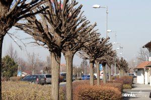 Közterületi fák csonkítása büntetést von maga után